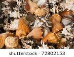 Basket Of Sea Shells  Mainly...