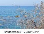 Dry Thorny Bush Over The Sea ...