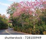 pink ceiba speciosa flowers... | Shutterstock . vector #728100949
