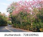 pink ceiba speciosa flowers... | Shutterstock . vector #728100961