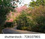 pink ceiba speciosa flowers... | Shutterstock . vector #728107801