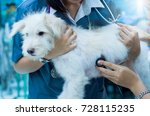 Small photo of Veterinarian diagnose and check up body of a dog with stethoscope medical equipments in veterinary clinic ,education health care concept, selective focus