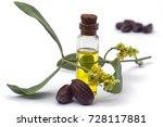 jojoba  simmondsia chinensis...   Shutterstock . vector #728117881