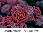 Stock photo roses in the garden vintage 728131795