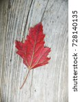 red quinoa leaf on a old wooden  | Shutterstock . vector #728140135