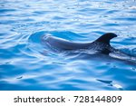 beautiful dolphin in the water. ... | Shutterstock . vector #728144809
