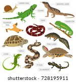 pet reptiles and amphibians... | Shutterstock .eps vector #728195911