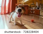 Stock photo funny puppy indoors 728228404