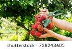 Man Holding A Rambutan Fruit O...
