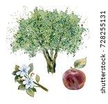 watercolor painting. apple tree ... | Shutterstock . vector #728255131