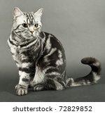 beautiful cat sitting | Shutterstock . vector #72829852