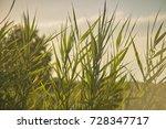 vegetation  grass  typical of... | Shutterstock . vector #728347717