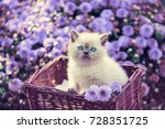 cute little kitten in a basket... | Shutterstock . vector #728351725