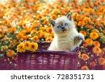 cute little kitten in a basket... | Shutterstock . vector #728351731