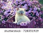 Stock photo cute little kitten in a basket in a garden near violet daisy flowers 728351929