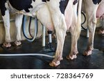 cow milking facility  milking... | Shutterstock . vector #728364769