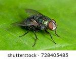 macro fly   Shutterstock . vector #728405485