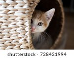 Stock photo cute ginger kitten peeking out of a wicker pod 728421994