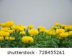 Marigold Ro Yellow Flower...