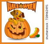 halloween. a small dog sits in... | Shutterstock .eps vector #728462491