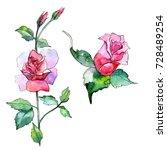 wildflower rose flower in a...   Shutterstock . vector #728489254