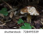 forest. mushrooms in the forest.... | Shutterstock . vector #728495539