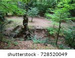 lost souls wood   epping forest ... | Shutterstock . vector #728520049