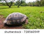 galapagos giant tortoise ... | Shutterstock . vector #728560549