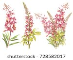 Illustration in watercolor of Willow-nerb and Lupine. Floral card with flowers. Botanical illustration.