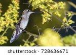 little bird | Shutterstock . vector #728636671