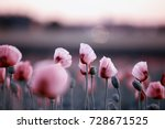 meadow with lilac poppy flowers ... | Shutterstock . vector #728671525