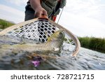 brown trout being caught in...   Shutterstock . vector #728721715