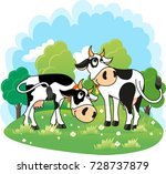 Two Dairy Cows Grazing In A...