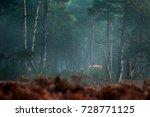 red deer  rutting season  hoge... | Shutterstock . vector #728771125