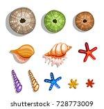 tropical islands seashells set   Shutterstock .eps vector #728773009