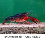red swamp crawfish   Shutterstock . vector #728778319