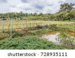 vegetable gardens in thailand. | Shutterstock . vector #728935111