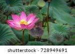 nelumbo nucifera  also known as ...   Shutterstock . vector #728949691