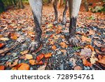 Stock photo muddy dog in autumn nature dirty paws of the labrador retriever on the footpath in the forest 728954761