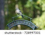 An Adorable Tufted Titmouse...