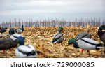 duck hunting decoys in a corn... | Shutterstock . vector #729000085