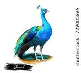 peacock digital art... | Shutterstock . vector #729005869