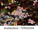 beautiful cherry blossoms fall... | Shutterstock . vector #729022444