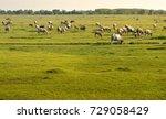buffalo  golden light  meadow ... | Shutterstock . vector #729058429