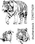 set of vector drawings on the... | Shutterstock .eps vector #729077659