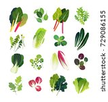 common leafy greens such as... | Shutterstock .eps vector #729086155