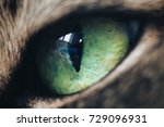 Green Eye Of Cat Extreme Close...