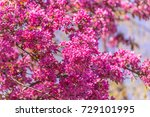 apple tree blossoms  | Shutterstock . vector #729101995