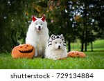 Two Dogs With Halloween...