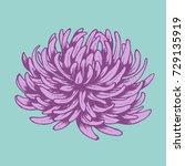 beautiful flower like a aster... | Shutterstock .eps vector #729135919
